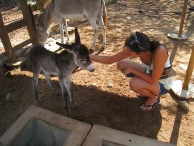Brand new baby donkey at the Donkey Sanctuary Aruba!.mp4_20150924_181413.578