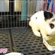 Cute Little Bunny Refuses To Eat.mp4_20150926_201011.203