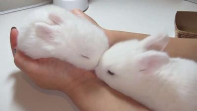 Fluffy Bunny Furball, Sleeping in my Hand!.mp4_20151002_113329.781