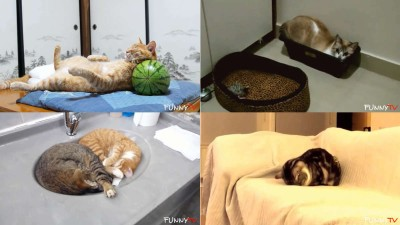 Funny Cats Sleeping in Strange Positions and Places Compilation 2015 - 1