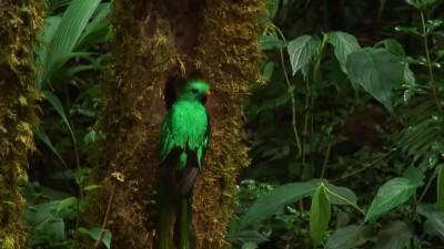 Quetzal Mesoamericano.mp4_20151004_203022.609