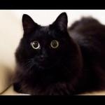 しゃべる猫で有名な「しおちゃん」の「おむかえ」を集めた動画