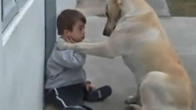 Sweet Mama Dog Interacting with a Beautiful Child with Down Syndrome. From Jim Stenson..mp4_20150920_194414.312