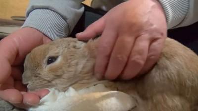 鳴きすぎるウサギ (おねだりダンダンウー!!) The cry of a rabbit (dan-dan-woo!!).mp4_20151011_124315.390