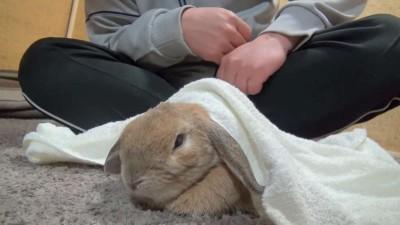 鳴きすぎるウサギ (おねだりダンダンウー!!) The cry of a rabbit (dan-dan-woo!!).mp4_20151011_124252.156