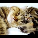母猫が赤ちゃん言葉(?)で子猫達をあやしてます