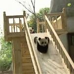笑った~!パンダとすべり台 その1
