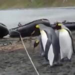 ペンギン対ロープ