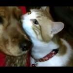 犬が大好きなねこ。浮気調査ですか?!