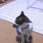 ネコが「寝ようよ~」って誘う動画。なお、飼い主もモフモフ