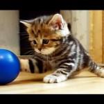 子猫のパリスは遊ぶの大好きな女の子