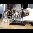 yt-3697-Funny-Cats-How-to-learn-physics