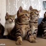 シンクロ率80%くらいの猫ダンス