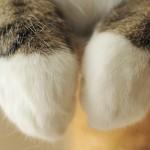 「まる」で見る猫の器用な前足