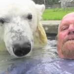 世界でただひとりシロクマと一緒に泳ぐ男