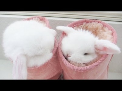yt-3959-CUTEST-BUNNIES-EVER