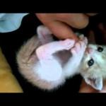 眠りながらピクピク動く赤ちゃん猫を母猫が抱きしめる!