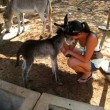 yt-4045-Brand-new-baby-donkey-at-the-Donkey-Sanctuary-Aruba