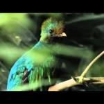 アステカの神の使い 美しい鳥ケツァール
