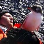 モコモコ羽毛の赤ちゃんペンギンは人間に興味津々