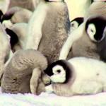 南極の絶景とコウテイペンギン。美しい動画です!