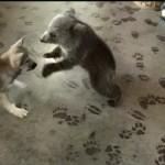 やんちゃだけど可愛い!仲良く遊ぶグリズリーとオオカミの子供