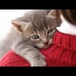 「ハグして~♥(=^ω^=)」甘えるネコが可愛すぎる!