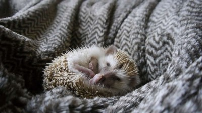 A day in the life of a Hedgehog !!!.mp4_20151008_222126.687