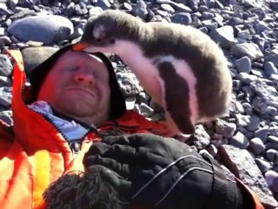 Baby Penguin Meets Human For First Time.mp4_20151005_135156.218