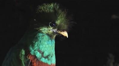 Quetzal Mesoamericano.mp4_20151004_202837.781