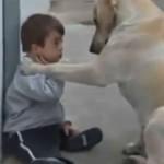 ダウン症の子供を気にかけて優しく接するラブラドール
