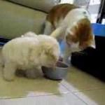 子犬「ゴハンくれないなら耳食べちゃうぞ!」