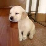 可愛い子犬のうたた寝姿