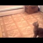 ネコ「ジャンプのシミュレーションはバッチリだったんですけど」