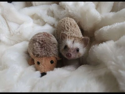 yt-3612-A-day-in-the-life-of-a-Hedgehog_675
