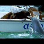 イルカと犬が見つめ合ってキス!