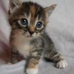 お母さんを探して鳴く赤ちゃん猫