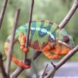 yt-3850-Real-Chameleon-Color-change