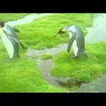 とまどうペンギン