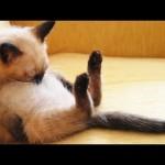 変な格好・変な場所で寝る猫の動画集2015版